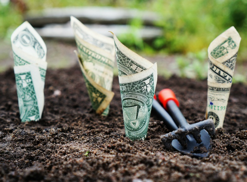 dollars growing in soil
